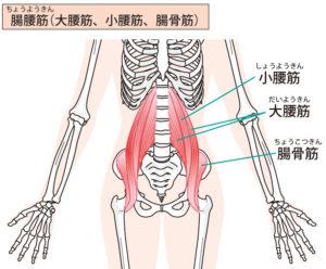 腸腰筋 大腰筋 小腰筋 腸骨筋 腰痛