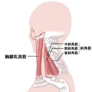 胸鎖乳突筋 マスク頭痛 首の筋肉